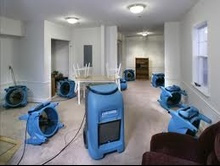 Carpet Cleaning Company In Ming Alpharetta Buford Georgia